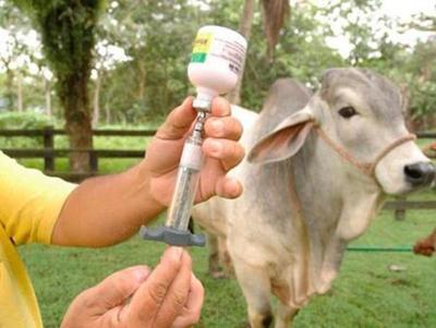 Segundo periodo de vacunación contra la aftosa y brucelosis arranca el lunes – Diario TNPRESS
