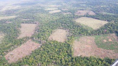 Destruyen 401 toneladas de marihuana en la Reserva Natural Morombí