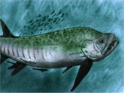 Hallan fósil de pez gigante de 70 millones de años en Patagonia argentina