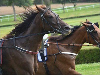 Fiscalía imputa a organizador de carrera de caballos
