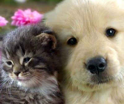 Leishmaniasis afecta a perros y también a gatos