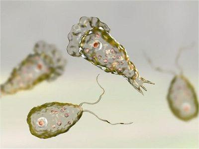 """Una mujer infectada con ameba """"comecerebros"""" en Estados Unidos"""