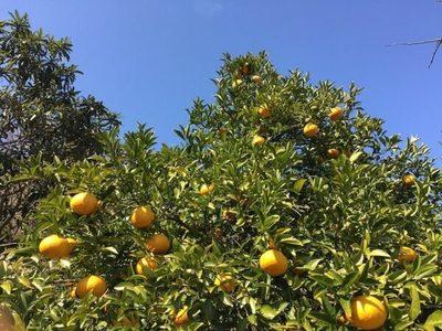 Vendedor ambulante irá a prisión por robar pomelos, informa defensora