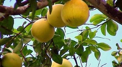 """La Corte ordeno la auditoría del caso más conocido como """"pomelos"""""""