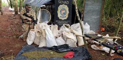 Eliminan más de 29 toneladas de marihuana en Concepción