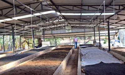 » Humus y compost para la sostenibilidad del suelo