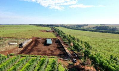 » SISTEMA SILVOPASTORIL DE AGROPECO: Inversión compatible con el ambiente