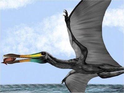 Descubren fósiles de reptil volador de hace 135 millones de años