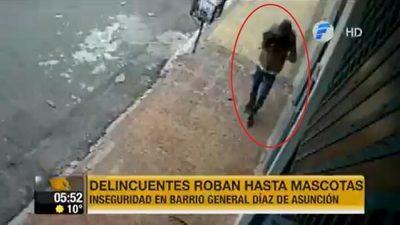 Delincuente roba una mascota en Asunción