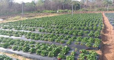 Constatan buena producción en fincas de la agricultura familiar