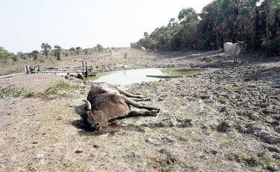 Pobladores del Chaco piden ayuda al gobierno para acceder a agua potable
