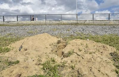 Destruyen el hábitat de lechuzas en la Costanera