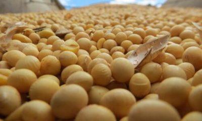 » Buena cosecha agrícola mantiene estable la economía durante la pandemia