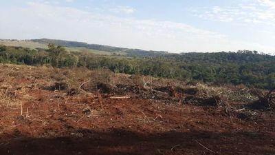 Denuncian a colono brasileño por presunta deforestación en Canindeyú