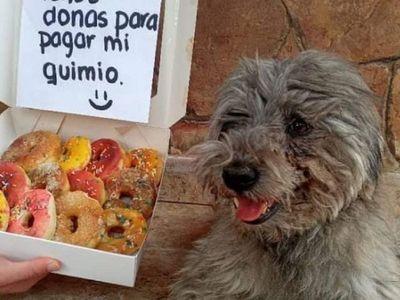 Venden donas para la quimio de su perrito