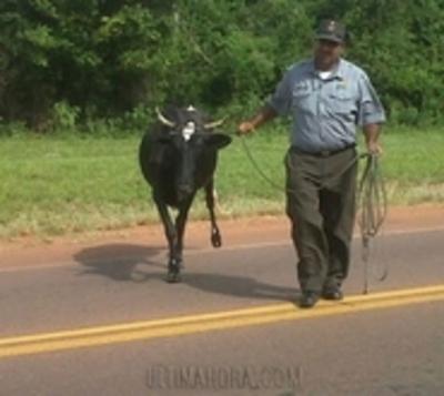 Los animales capturados por la Caminera podrían ser sacrificados