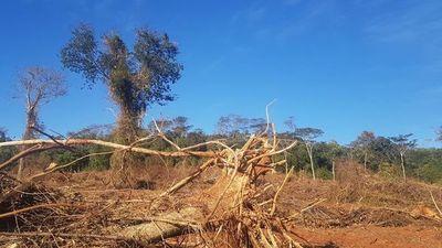 Constatan deforestación en tierras que estarían alquiladas por colono brasileño