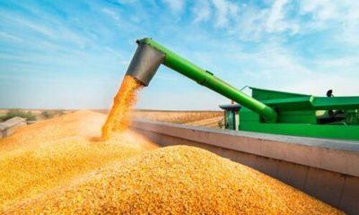 » Hay buenos rendimientos de maíz, pero poca expectativa en la suba de precios